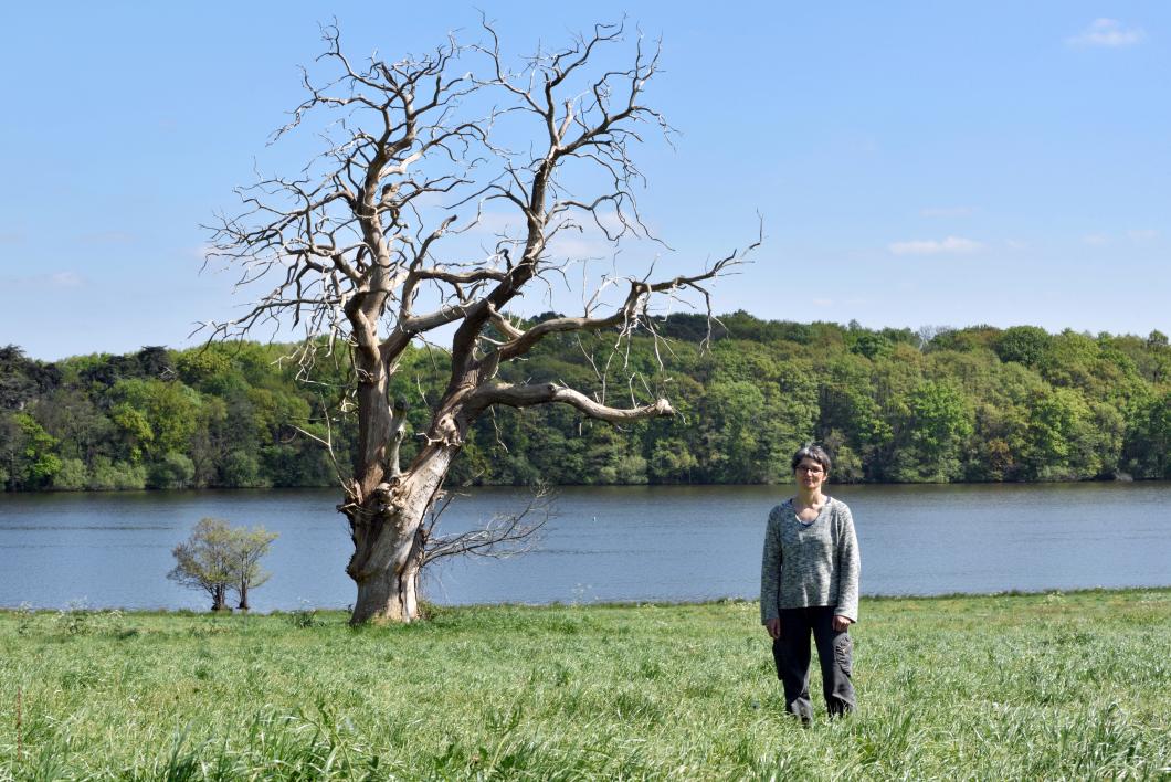 Armelle, née à Sucé-sur-Erdre, Loire-Atlantique, Pays de Loire, France.  Vieux châtaignier dans les prairies du bord de l'Erdre au Grand Nay.